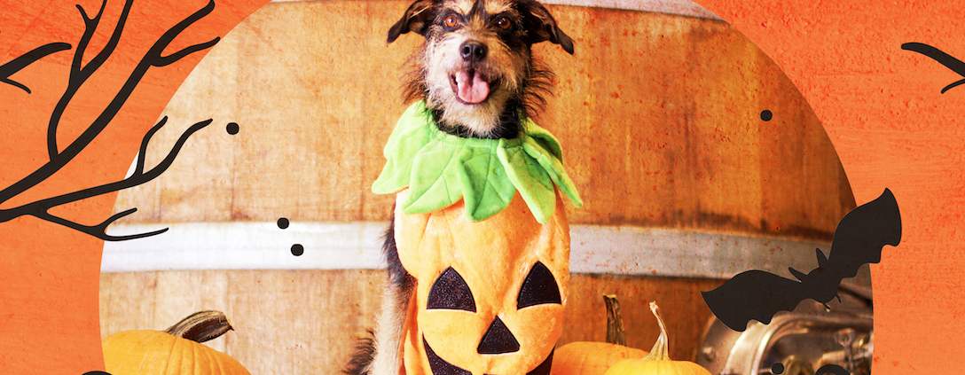 dog halloween costume contest